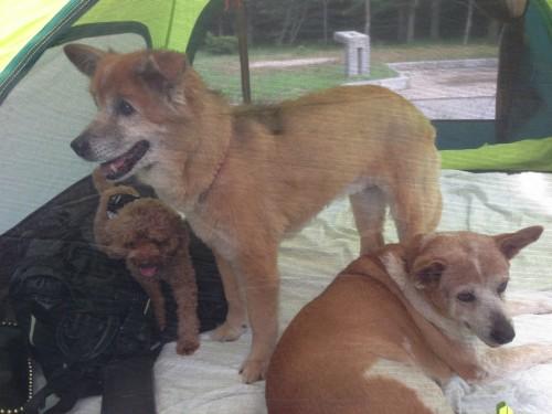 紀州加太オートキャンプ場_BBQ中の犬達