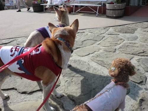 道の駅うずしお_同じ方向を向く犬たち
