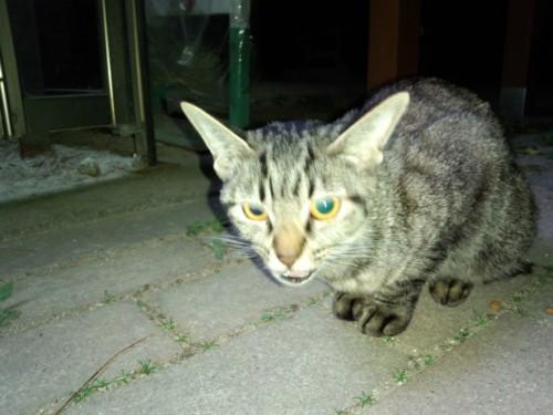 道の駅うずしおの野良猫