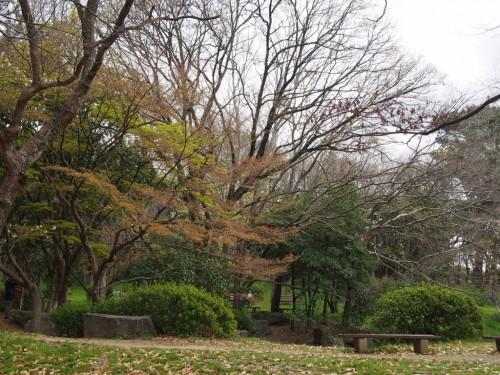 大泉緑地ヨシダBBQ_周りの景色