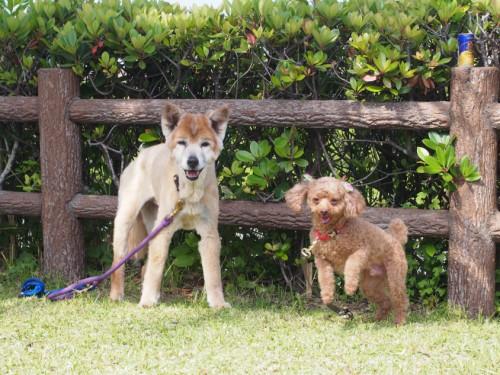 2014宮崎白浜オートキャンプ場_嬉しそうな犬